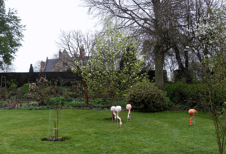 England Photograph - Flamingos On The Lawn by Mindy Newman