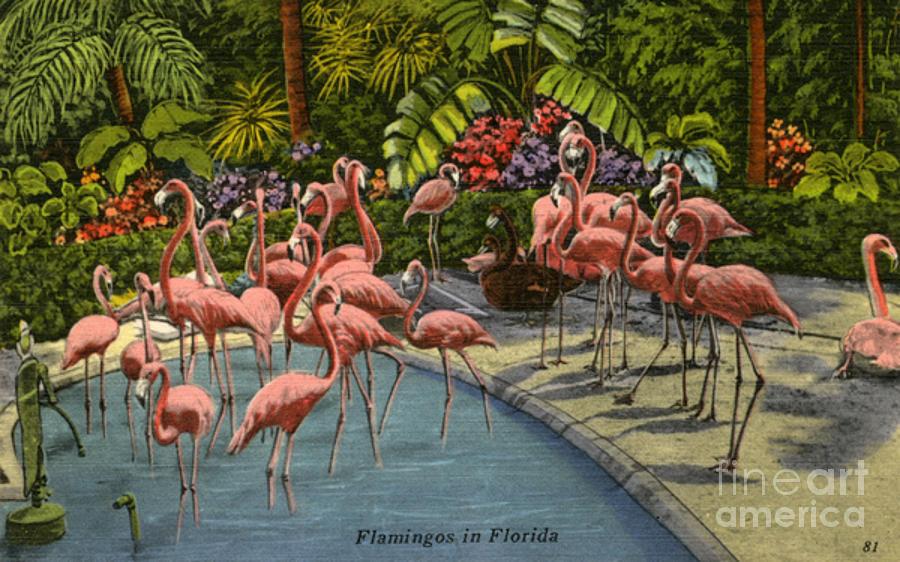 Flamingos Vintage Postcard Digital Art by Jennifer Capo