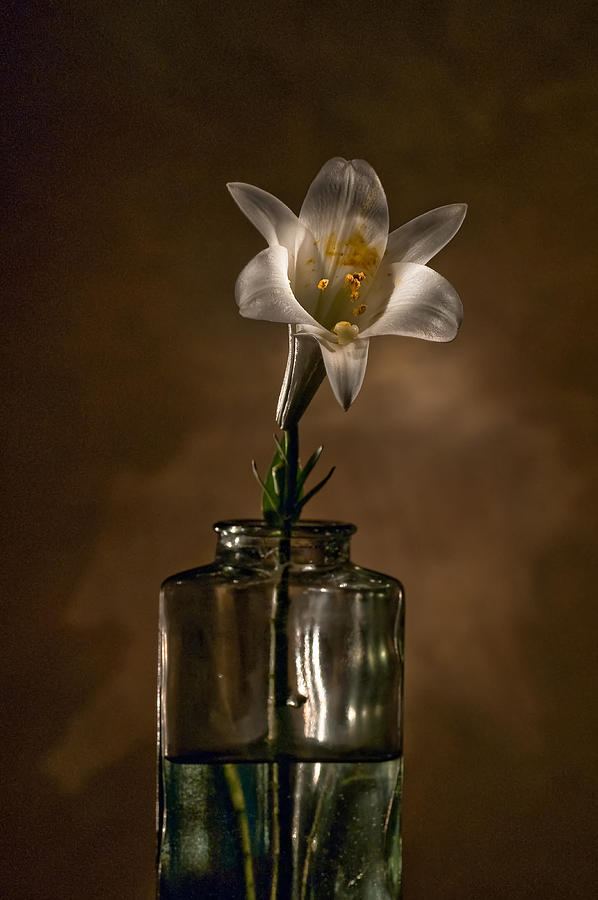 Flower Photograph - Flashlight Series Easter Lily 3 by Lou  Novick