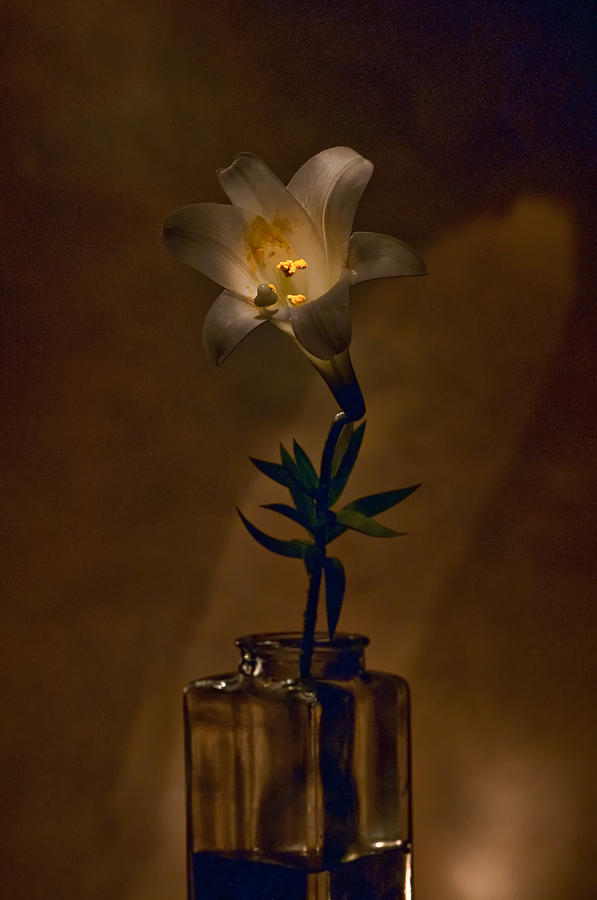 Flower Photograph - Flashlight Series Easter Lily 4 by Lou  Novick