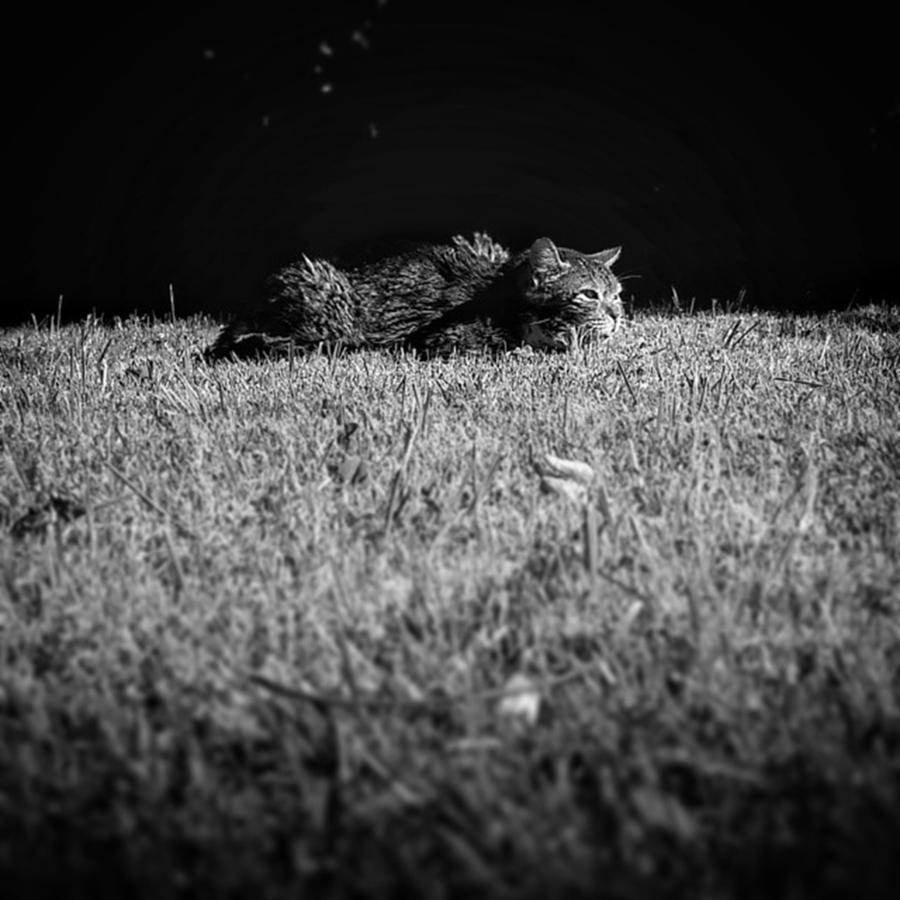 Grass Photograph - Flat Cat by Rafa Rivas