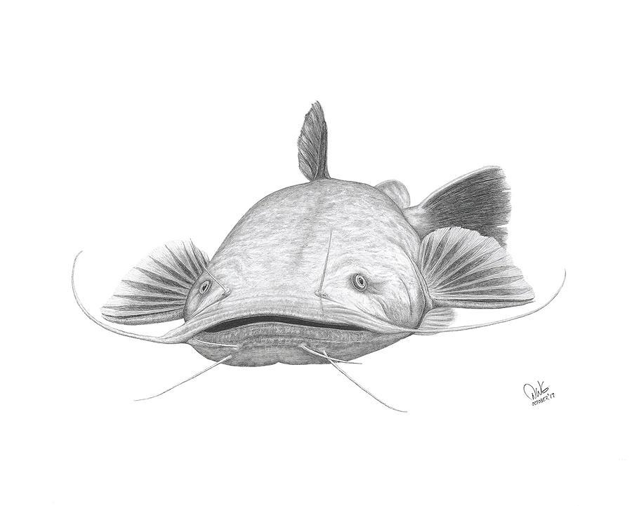 рыба сом картинки карандашом можно