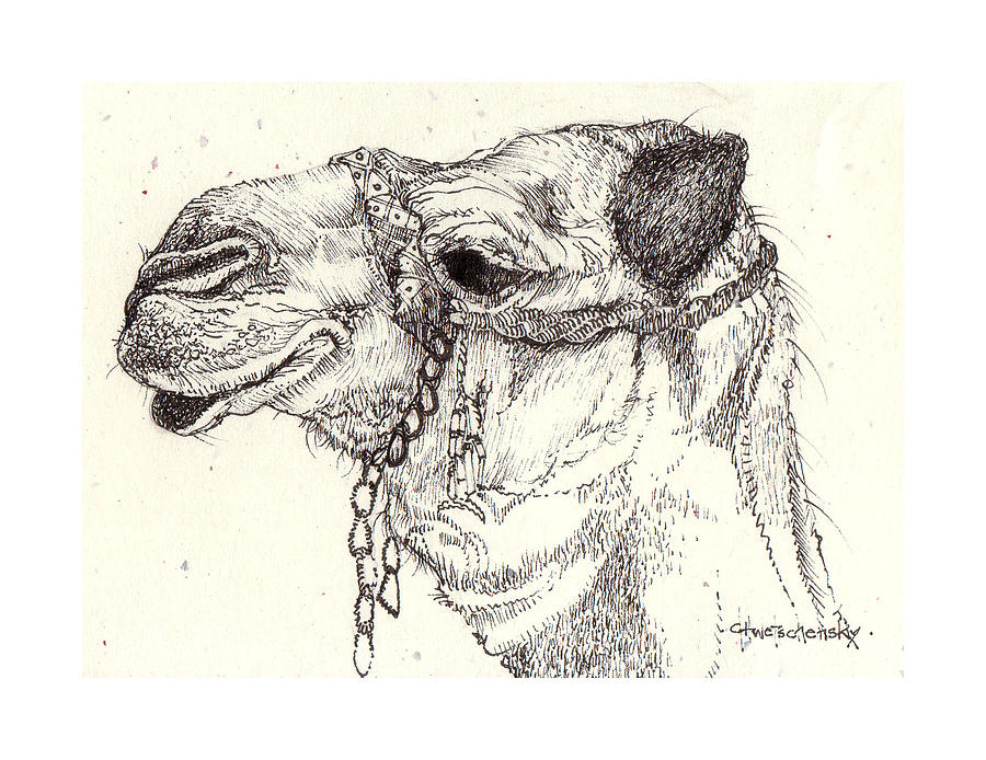 Camel Drawing - Fleas Of A 1000 Camels by Deborah Wetschensky