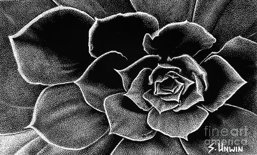 Fleur Blanc Succulent by Sheryl Unwin