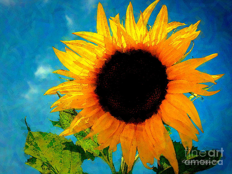 Girl/'s fleur de soleil