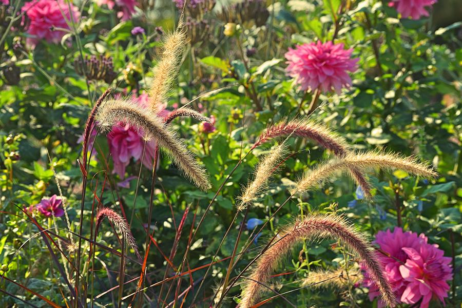 Field Flowers Photograph - Fleurs Des Champs by Valerie Dauce