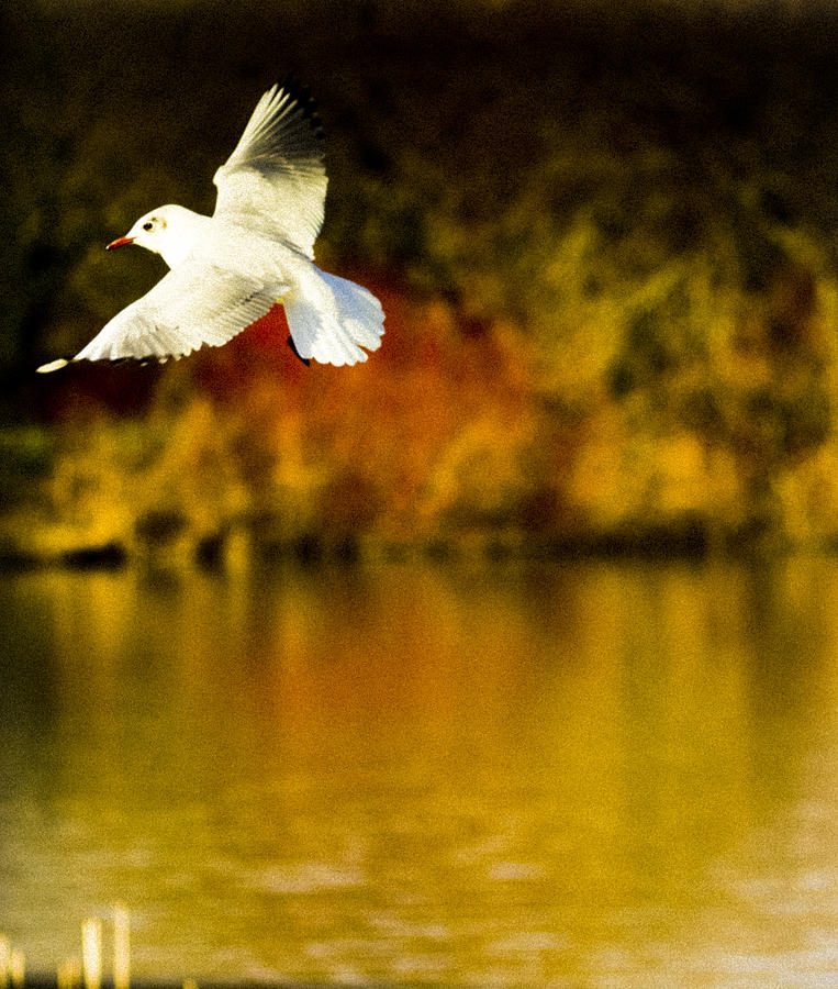 Fly Photograph - Flight by Angela Aird