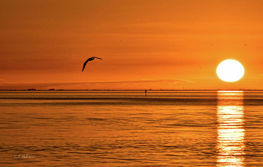 Seagull Photograph - Flight At Sunset by Christopher Holmes