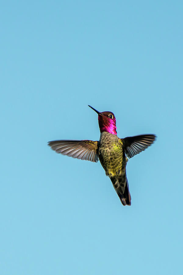 Flight of a Hummingbird by Paul Johnson