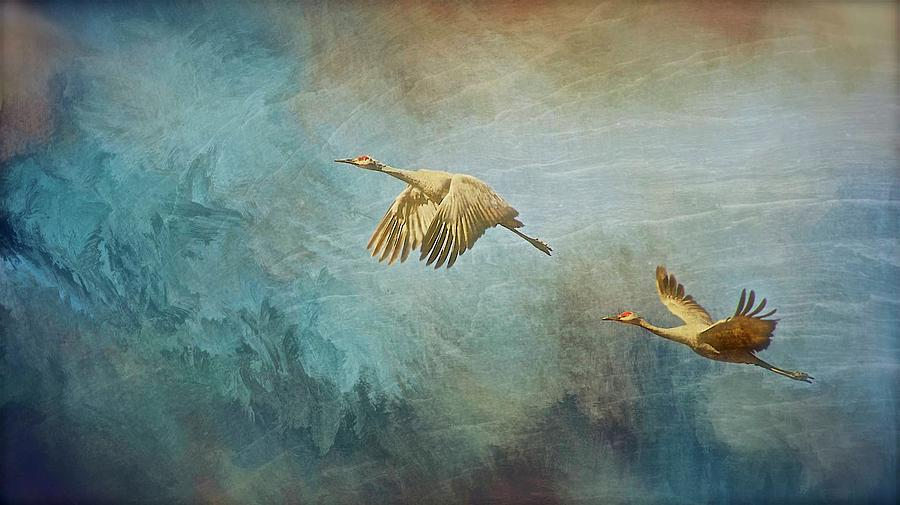 Nature Photograph - Flight of Fantasy, Sandhill Cranes by Zayne Diamond Photographic