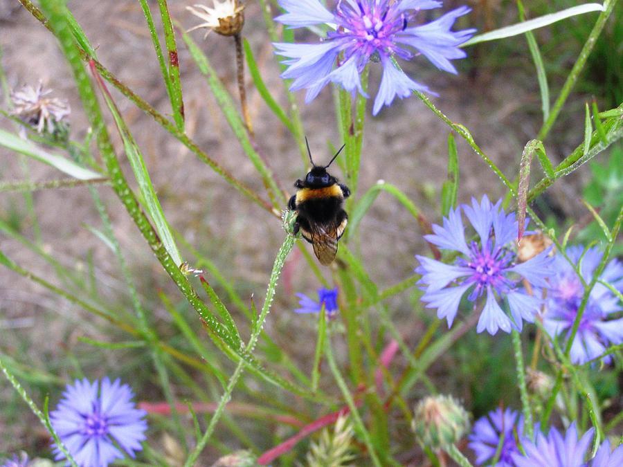 Photograph Photograph - Flight Of The Bumble Bee - 3 by Joanna  Kasprzak
