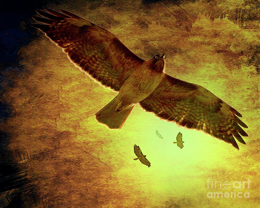 Red Tail Hawk Photograph - Flight Of The Golden Hawks . 7d5066 by Wingsdomain Art and Photography