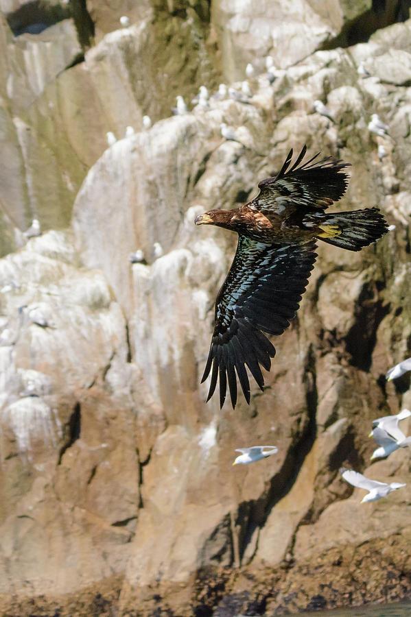 Alaska Photograph - Flight Of the Intruder by Emily Bristor
