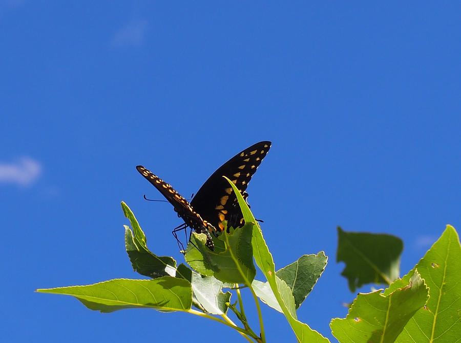 Butterfly Photograph - Flight Prep by Kayla Hall