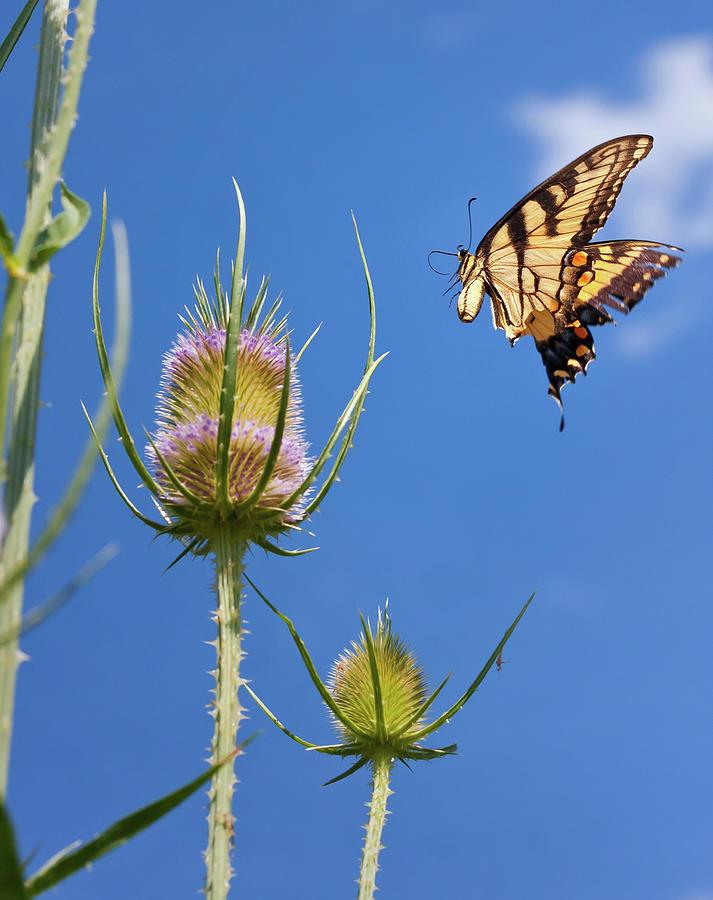 Butterfly Photograph - Flight Risk by David Lamb