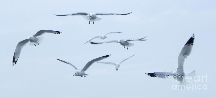 Gull Photograph - Flight by Steve Rudolph