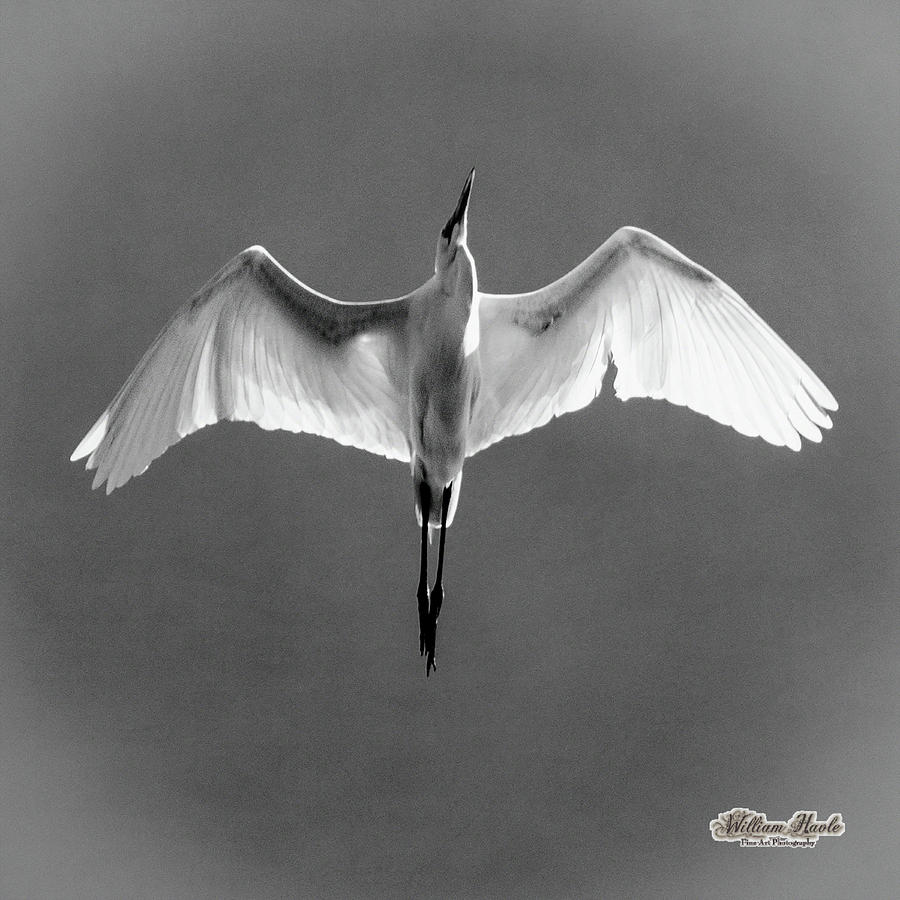 Flight by William Havle