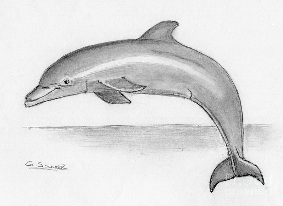 Dolphin Drawing - Flip by George Sonner