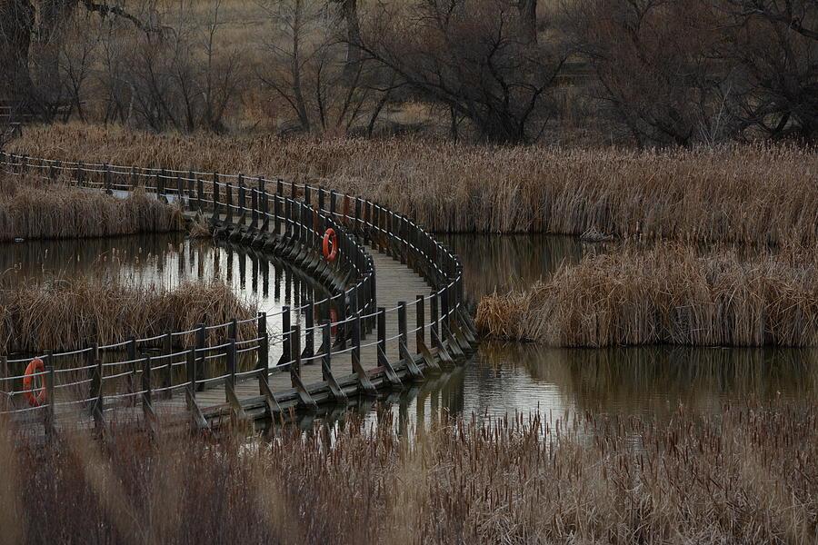 Bridge Photograph - Floating Bridge by Paulina Roybal