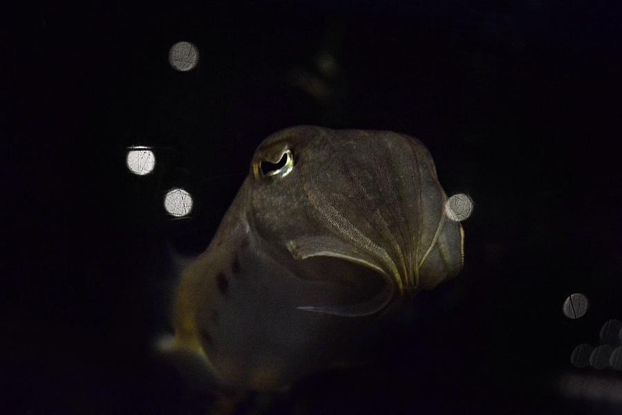 Animals Photograph - Floating In Deep Space by Stephanie Varner