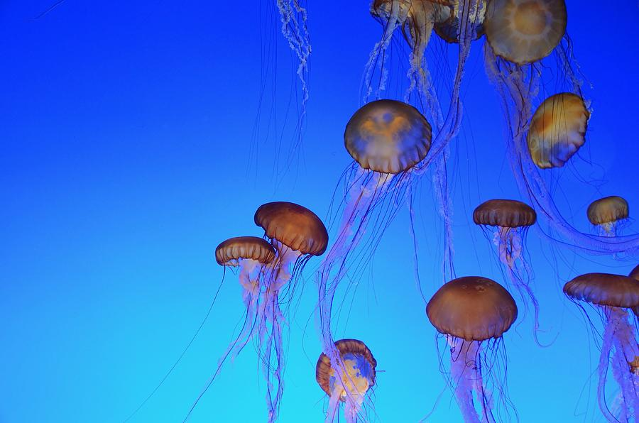 Floating Jellyfish Ballet by Marilyn MacCrakin