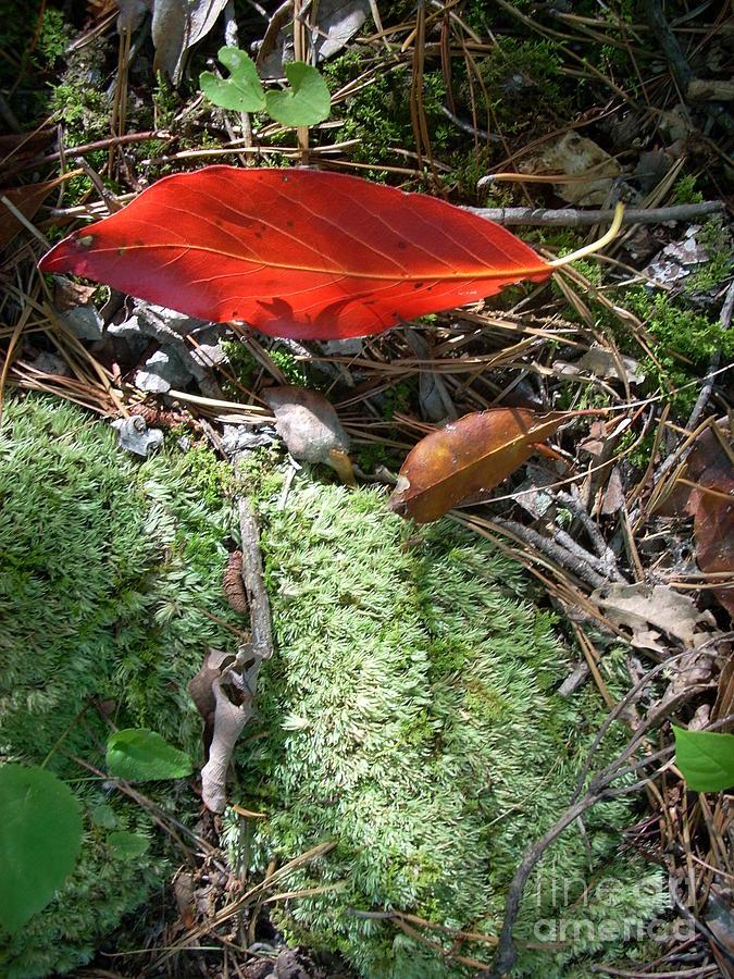 Summer Photograph - Floating Leaf by Beebe  Barksdale-Bruner