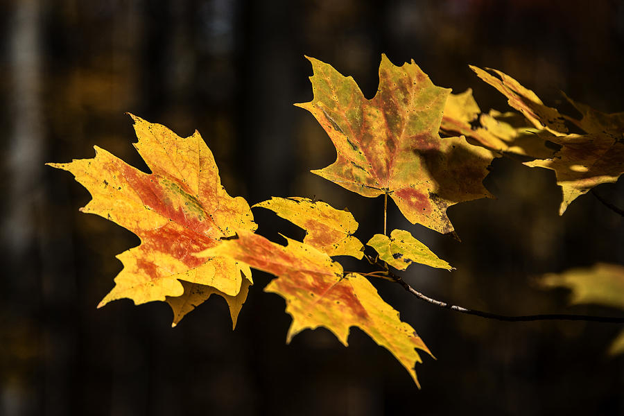 Autumn Photograph - Floating Leaves by Gej Jones
