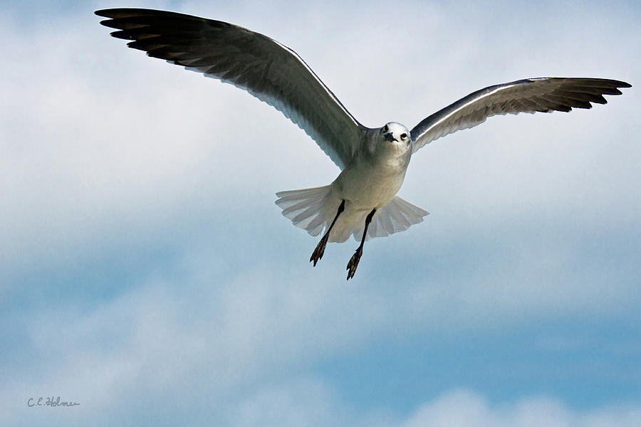 Bird Photograph - Floating On Air by Christopher Holmes