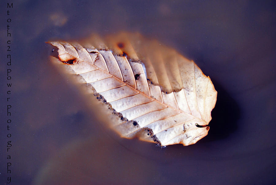 Leaf Photograph - Floating On by Megen McAuliffe