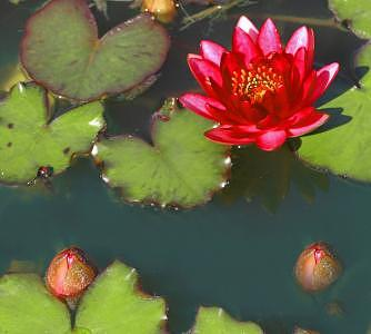 Floating Photograph - Floating Red I by Tom Dell