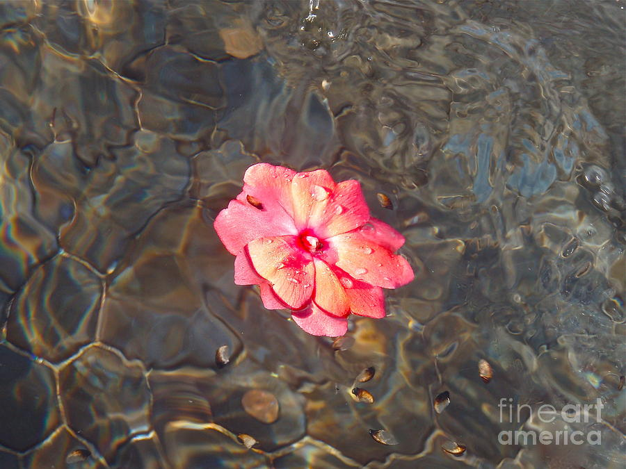 Water Photograph - Floating Rose by Alex Garcia