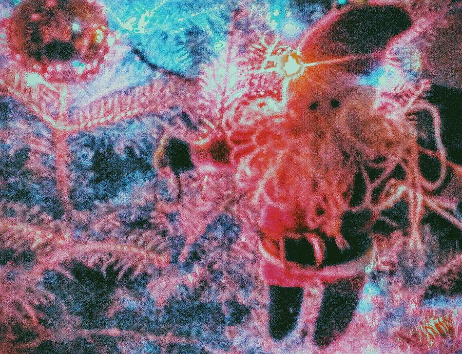 Floating Santa Photograph