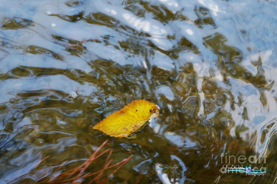 Floating Through Life Photograph