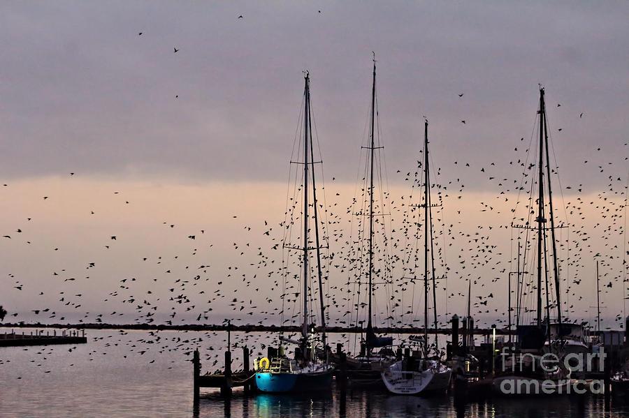 Flock Photograph