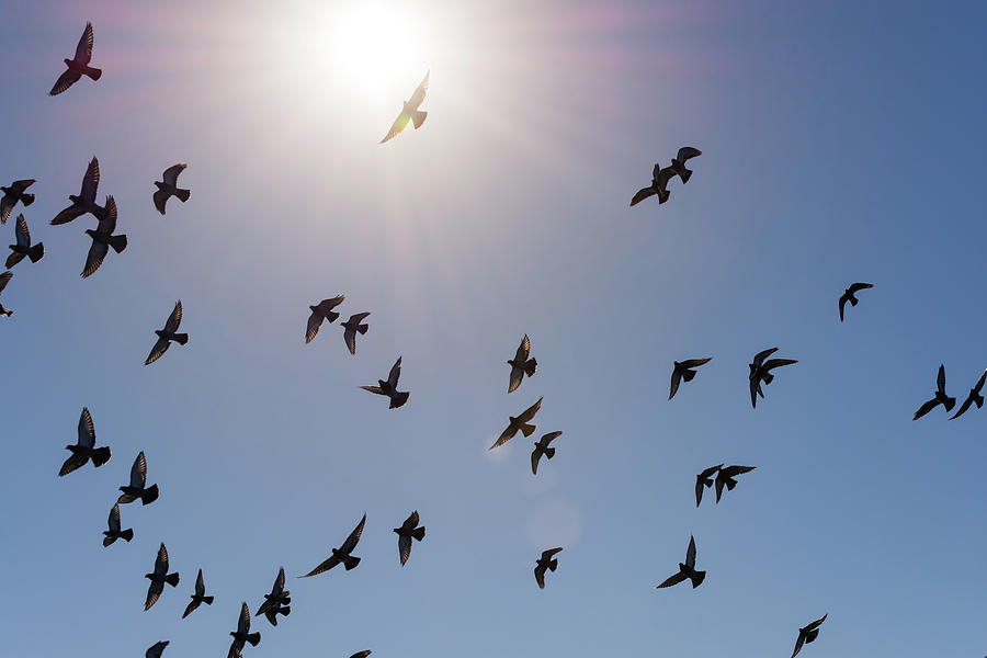 flock of birds flying against blue sky and bright sun photograph by