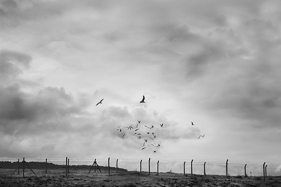 Flock Of Birds Flying Over Empty Field With Fences