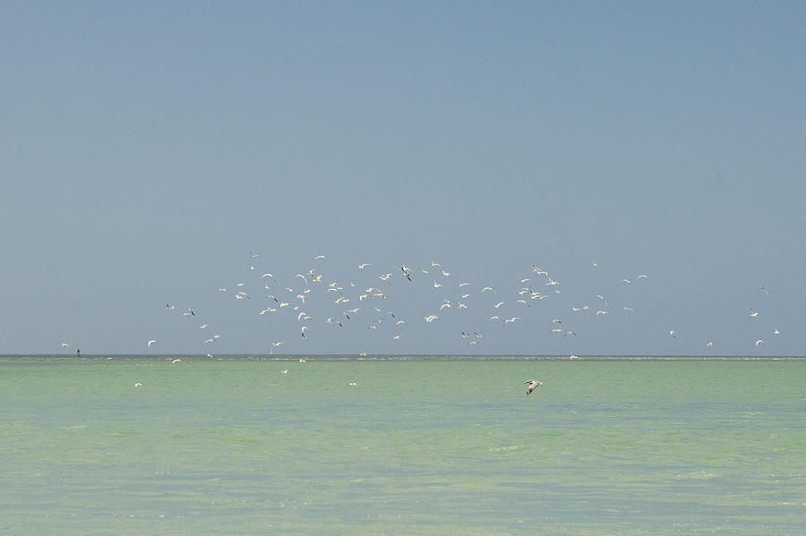 Boca Grande Photograph - Flock Of Shore Birds Flying Over Ocean by Stephanie McDowell