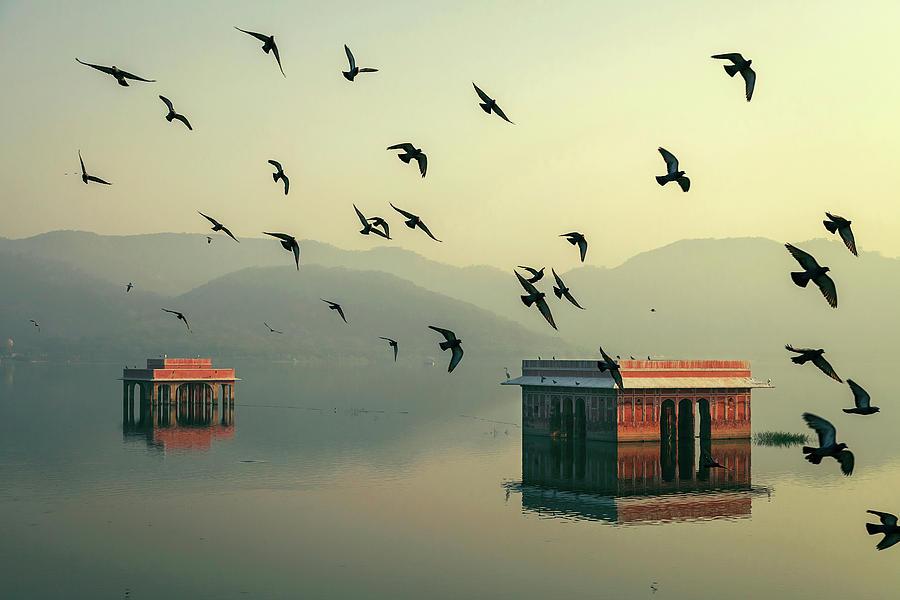 Flocks of Pigeons, Jal Mahal, Jaipur by Mahesh Balasubramanian
