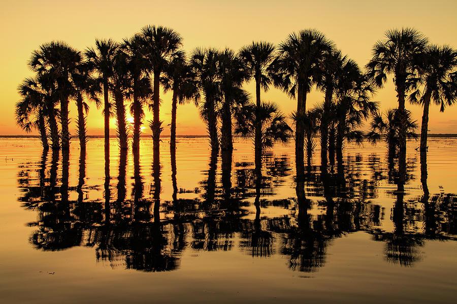 Flooded Lake Sunrise by Stefan Mazzola