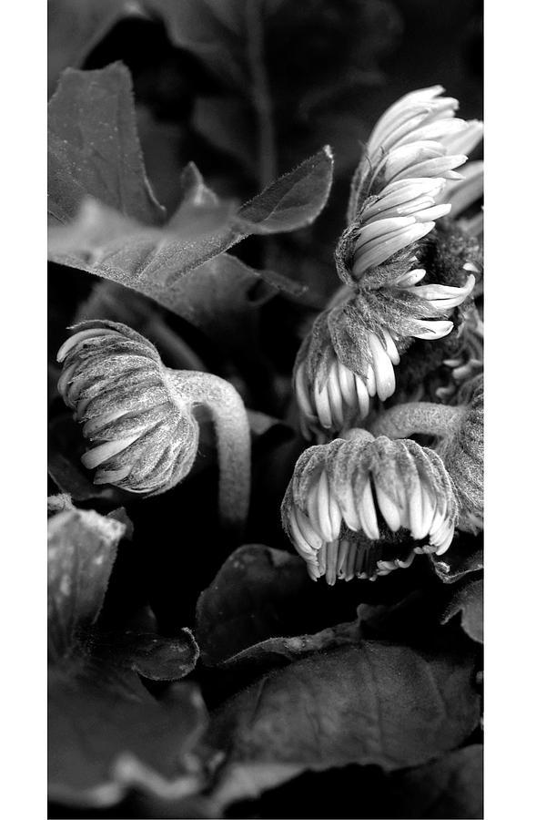 Flora 7 Photograph by Theresa Vreeland