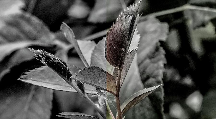 flora by Jerald Blackstock