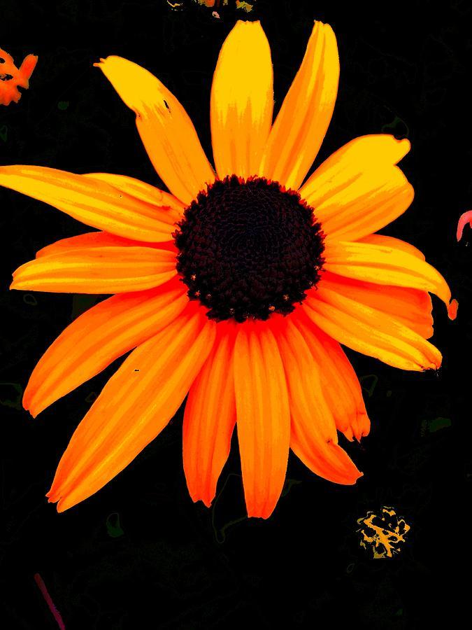 Flowers Digital Art - Floral 1 by Chuck Landskroner