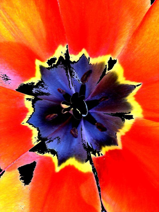 New Digital Art - Floral 1229 by Chuck Landskroner
