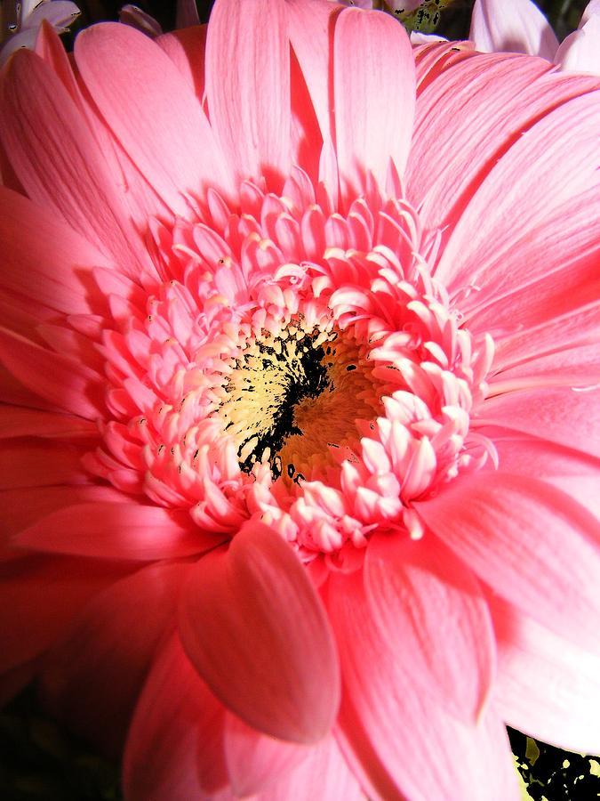 New Digital Art - Floral 41 by Chuck Landskroner