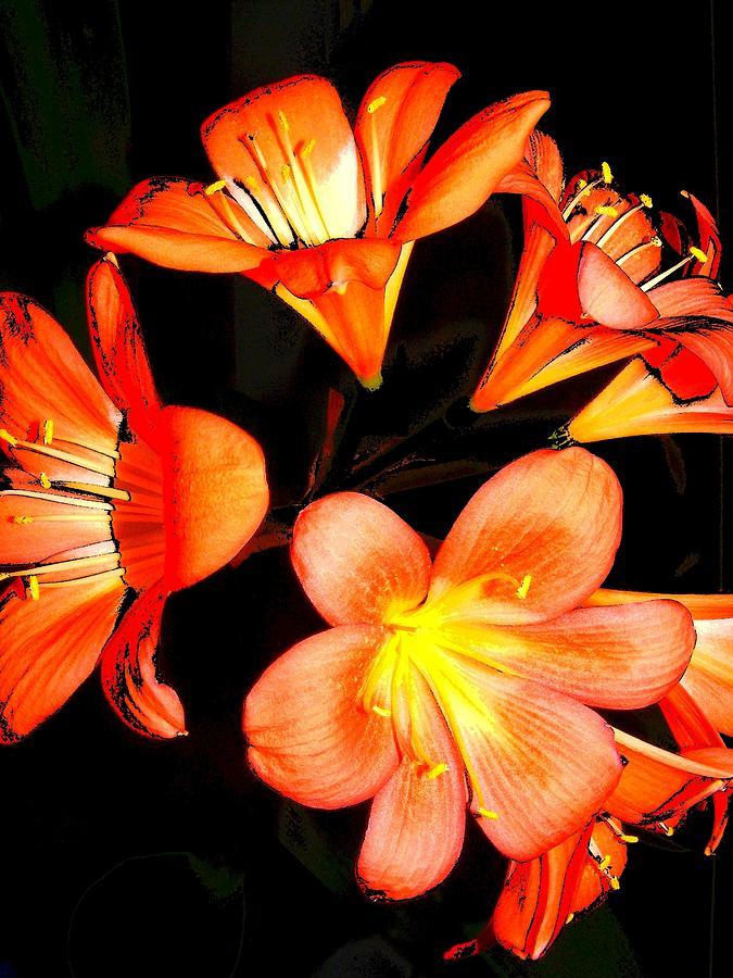 New Digital Art - Floral 6019 by Chuck Landskroner