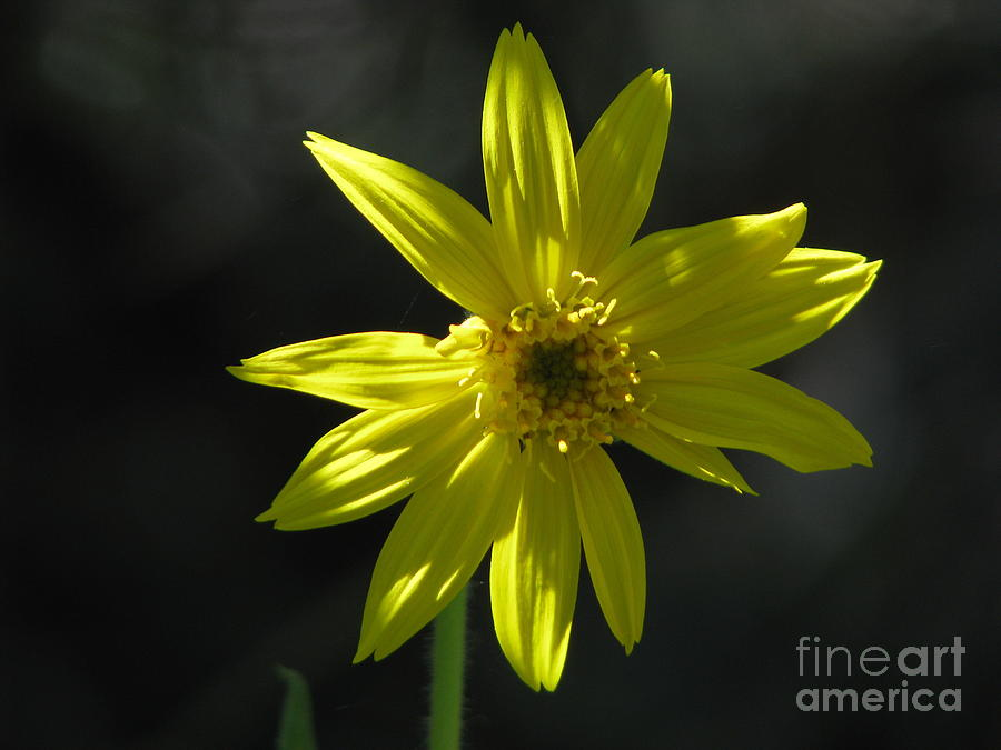 Light Photograph - Floral by Amanda Barcon