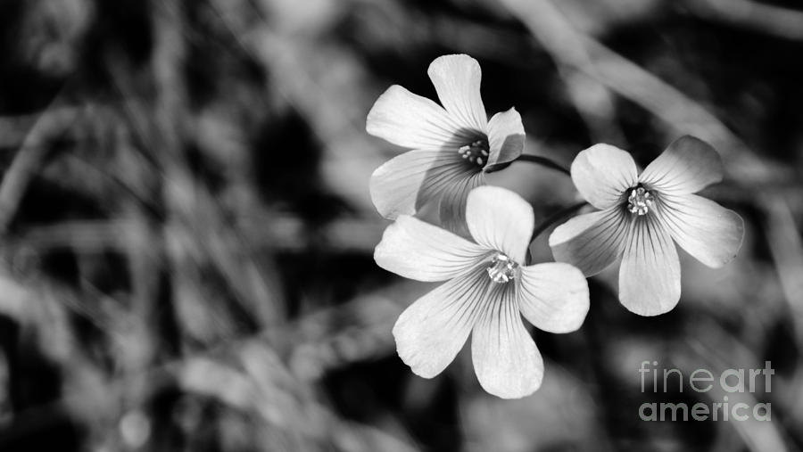 Blossom Photograph - Floral Black And White by Andrea Anderegg