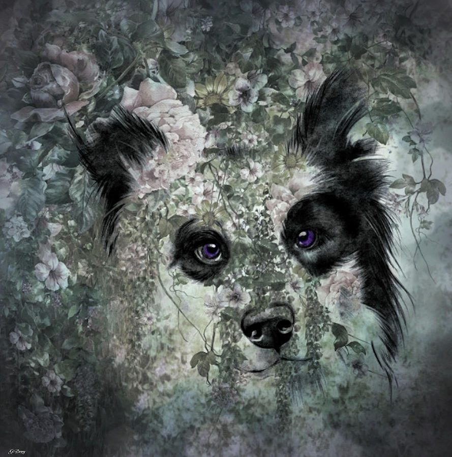 Border Collie Mixed Media - Floral Border Collie by G Berry