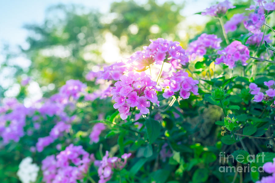 Floral bush Photograph by Anna Om