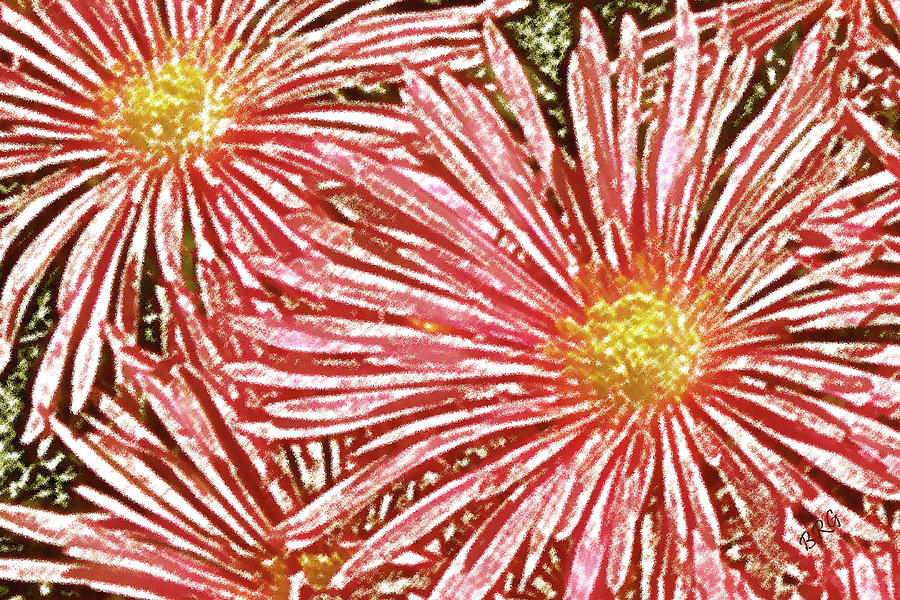 Ice Plant Flowers Photograph - Floral Design No 1 by Ben and Raisa Gertsberg